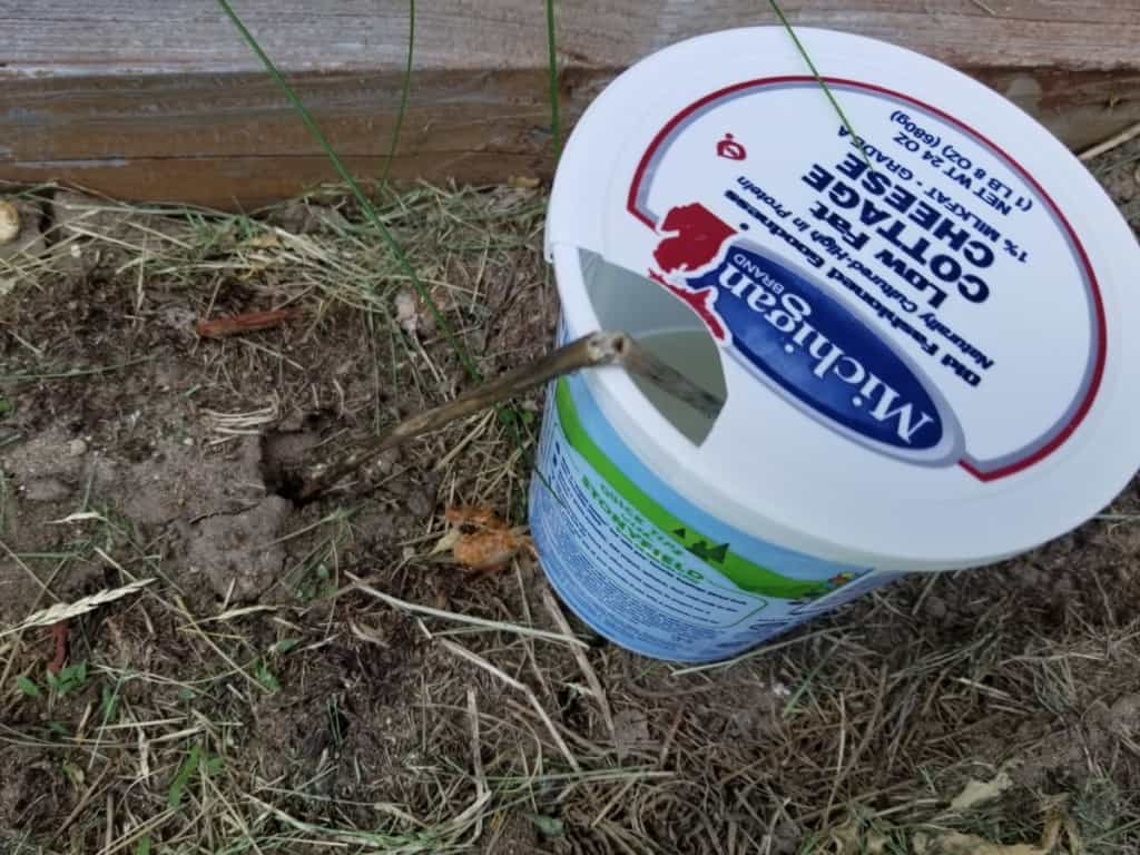 homemade ant trap