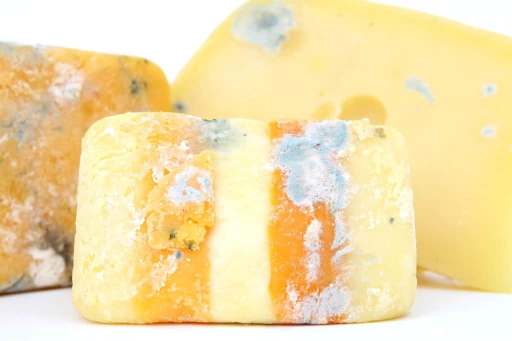 stinky cheese brevibacteria